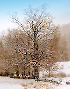 Sugar Maple with Filters