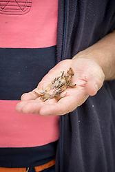 Handful of dahlia seeds