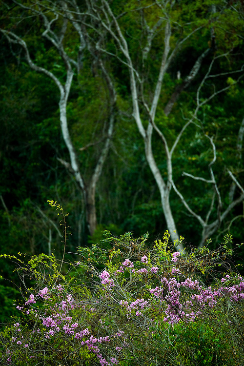 Ipaba_MG, Brasil...Reserva Particular do Patrimonio Natural (RPPN) fazenda Macedonia em Ipaba, Minas Gerais. ..The Private Reserve of Natural Heritage (RPPN), Macedonia farm...Foto: JOAO MARCOS ROSA /  NITRO