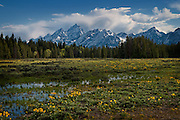 A moody photo in Grand Teton National Park with distant mountains and seasonal wildflowers in the Spring runoff.