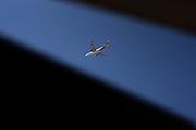 20210830 / URUGUAY / MONTEVIDEO /      Avión de Avianca. Foto: Ricardo Antúnez / adhocFOTOS