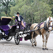 Horse -Drawn Carriages wait for customers on the edge of Central Park. Horse-Drawn Carriages provide a wonderful way to experience the beauty of Central Park, Manhattan, New York. They can be found all year round lined up along Central Park South between 5th and 6th Avenues waiting for customers. Central Park, Manhattan, New York, USA. Photo Tim Clayton