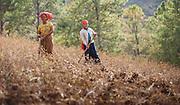Women working on the fields in Myanmar