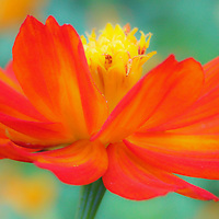 """Whirl Wind""<br />