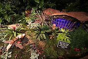 NYBG Holiday Train Show (Photo by Ben Hider)