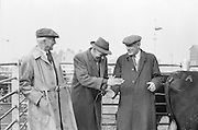 Salesman Richard Kenny watches a bargain struck between Abbey Thompson and George Walker at the Dublin Cattle Market..25.04.1962 Prussia Street Cattle Market, Dublin, City,