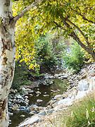 Oso Creek Trail in Mission Viejo