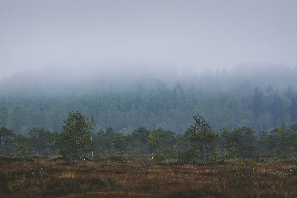 """Before sunrise in foggy and cloudy morning in raised bog looking towards hill covered with forest, nature reserve """"Augstroze"""", Vidzeme, Latvia Ⓒ Davis Ulands 