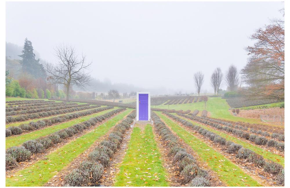 Wanaka Lavender Farm, Otago.