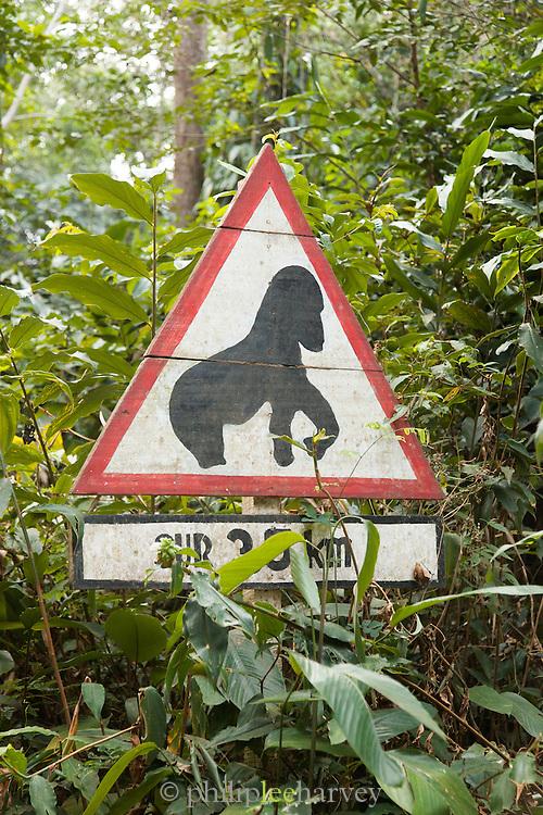 Gorilla sign, Odzala-Kokoua National Park.