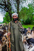 Herding goats and sheep along a road near Srinagar, Kashmir, Jammu and Kashmir State, India.