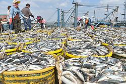 Oct. 2, 2018 - Shishi, China - Fishermen arrange newly-caught fish at Xiangzhi fishing port in Shishi, southeast China's Fujian Province. (Credit Image: © Song Weiwei/Xinhua via ZUMA Wire)