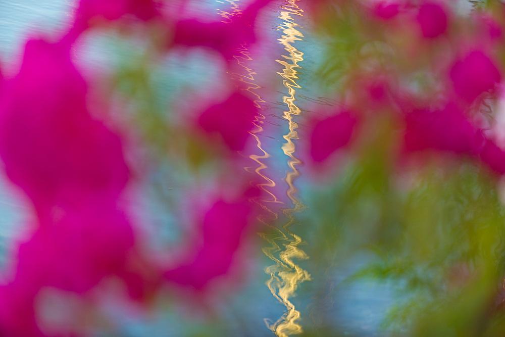 Abstract design of a sailboat mast framed by flowers, morning light, February, Marina Palmira, La Paz, Baja, Mexico