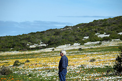 Cape Town - 180814 - Jacques Naude from George admires the flowers. Tourists and local nature enthusiasts flok to the West Coast National Park as this years annual flower season starts. The official Flower Season opens on 1 August and closes on 30 September, allowing visitors to the park access to the prolific Postberg section, which is closed to the public throughout the rest of the year. Picture: Armand Hough / African News Agency (ANA)