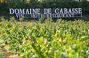 vineyard domaine de cabasse rhone france