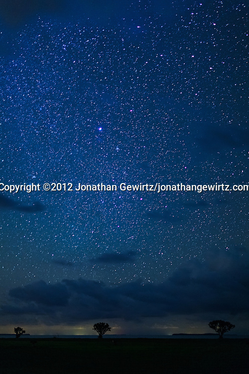 A star-filled sky dominates three small trees overlooking Florida Bay near the outdoor amphitheater in the Flamingo section of Everglades National Park, Florida. WATERMARKS WILL NOT APPEAR ON PRINTS OR LICENSED IMAGES.