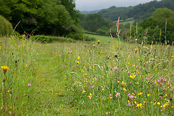 Meadow, East Sussex