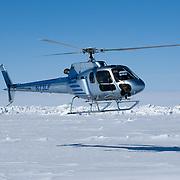 Pilot Bob Dunbar maneuvers his chopper over the ice of the Beaufort Sea while darting polar bears for Dr. Steven Amstrup. Alaska.