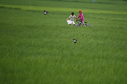 July 29, 2017 - Lalitpur, Nepal - Boys ride a bicycle through paddy fields on the outskirts of Kathmandu, Nepal on Saturday, July 29, 2017. (Credit Image: © Skanda Gautam via ZUMA Wire)