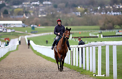 A horse on the way back from the gallops during St Patrick's Thursday of the 2019 Cheltenham Festival at Cheltenham Racecourse.