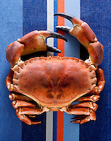 Crab photographed for seafood magazine feature.