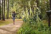 """PINE APPLE, AL – NOVEMBER 17, 2015: Pam Moton, 30, walks on a trail behind the Pine Apple Health Center. """"When you're in the country like this,"""" Moton said, """"people think it's normal to be big and have high blood pressure. I'm just trying to stay healthy. I try to walk everyday. It's something I've always been about."""" After decades of the relentless spread of diabetes in the United States, federal data now show that the number of new cases has finally started to decline. On December 1, 2015, the Centers for Disease Control and Prevention published figures showing three consecutive years of decline in new cases, between 2012 and 2014.<br /> CREDIT: Bob Miller for The New York Times"""