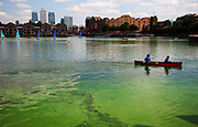 Green algae growing in Shadwell Basin, Wapping, East London. With concerns over the dangerous blue green algae, some local residents are concerned as this is a recreation area for children.
