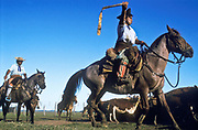Gauchos hearding cattle into pens to be vaccinated, La Estrella ranch, Corrientes, Argentina