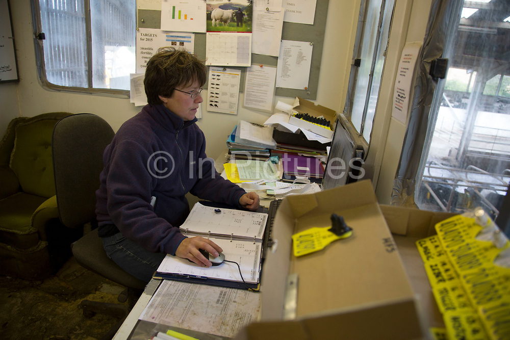 Sally Banks collating data on the herd in the on site office. With a closed herd with no outside influence from other herds off site apart from the introduction of a bull the aim is that the cows have one calf per year to keep them milking and to replenish their stocks. To ensure that this provenance as well as each separate element on the farm runs as well and as profitably as possible, all aspects of data are collected and computerised. Wildon Grange Dairy Farm, Coxwold, North Yorkshire, UK. Owned and run by the Banks family, dairy farming here is a scientific business, where nothing is left to chance. From the breeding, nutrition and health of their closed stock of Holstein Friesian cows, through to the end product, the team here work tirelessly, around to clock to ensure content and healthy animals, and excellent quality milk.