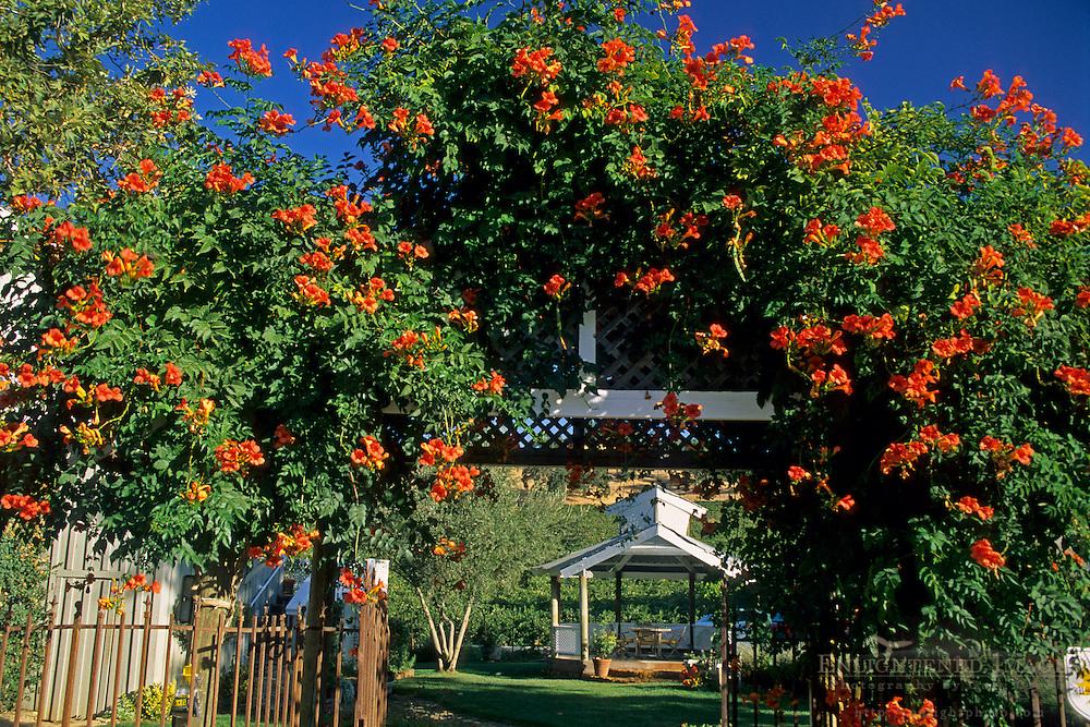 Justin Vineyards & Winery, Chimney Rock Road, Paso Robles, San Luis Obispo County, California