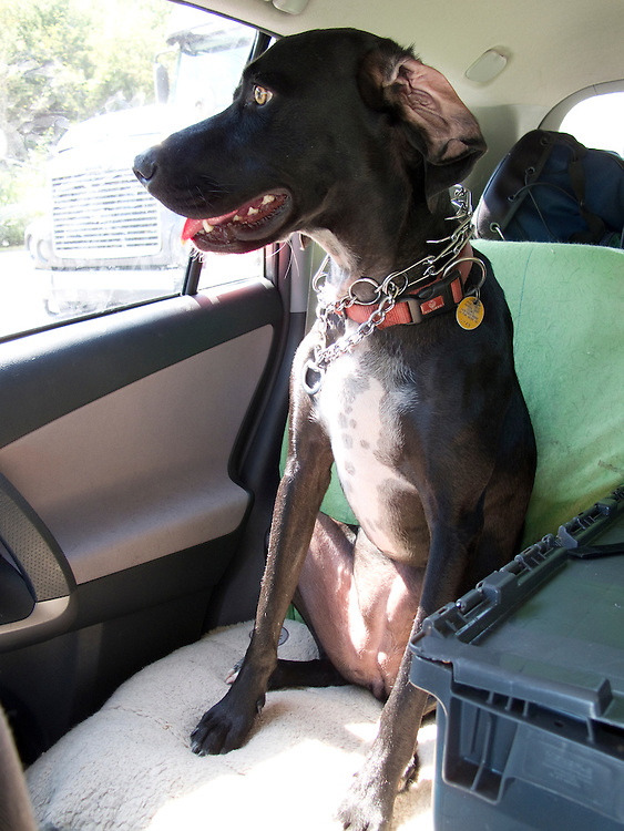 Pepper looks out the window of the car where she's logged 4,000 miles to see a collosal traffic jam near Knoxville.