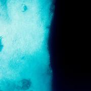 A Caribbean reef shark (Carcharhinus perezi) swims along the edge of a blue hole in The Bahamas.