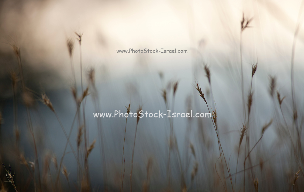 Selective focus on a plant in a wild field