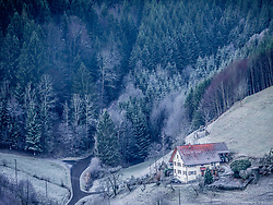 Trees in black forest with farmhouse on hill