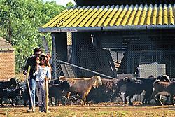 Herders & Goats