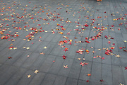 Red autumn leaves fall on a man made surface. London, UK.