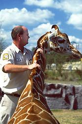 Giving Reinforcement To Giraffe