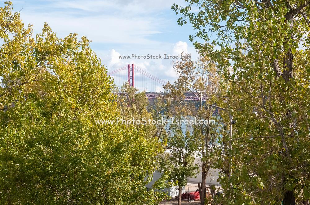 Ponte 25 de Abril, 25th of April suspension Bridge, as seen through the trees of the waterfront park Belem, Lisbon, Portugal