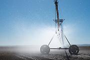 Pivot irrigation machine at Madison Farms