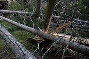 Fallen trees after summer storms in a forest above Badia-Abtei in the Dolomites region of south Tyrol, Italy.