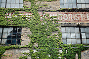 SHOT 7/8/14 12:22:20 PM - Vegetation overgrows a wall on the side of an old factory in downtown Buffalo, N.Y. Buffalo, N.Y. is the second most populous city in the state of New York. Located in Western New York on the eastern shores of Lake Erie and at the head of the Niagara River across from Fort Erie, Ontario, Canada, Buffalo is the seat of Erie County and the principal city of the Buffalo-Niagara Falls metropolitan area, the largest in Upstate New York. By 1900, Buffalo was the 8th largest city in the country, and went on to become a major railroad hub, the largest grain-milling center in the country and the home of the largest steel-making operation in the world. The latter part of the 20th Century saw a reversal of fortunes: by the year 1990 the city had fallen back below its 1900 population levels. (Photo by Marc Piscotty / © 2014)