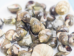 Close-up of fresh common periwinkle , Getxo, Algorta, Basque Country, Biscay, Spain, Europe