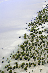 Mangroves line the shores of Roebuck Bay at low tide as the mud flats are exposed.