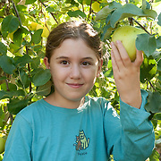 11 year old girl picks apples at an orchard in Ipswich, Massachusetts, USA