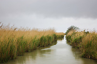 """Canal with tall reed grass at lagoon """"Etang du Vaccares"""", Camargue, France"""