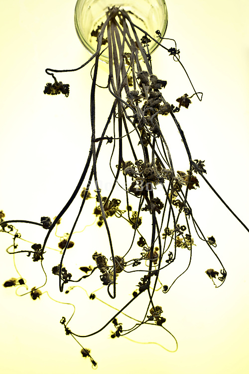 bouquet of dried wild flowers standing in a glass jar
