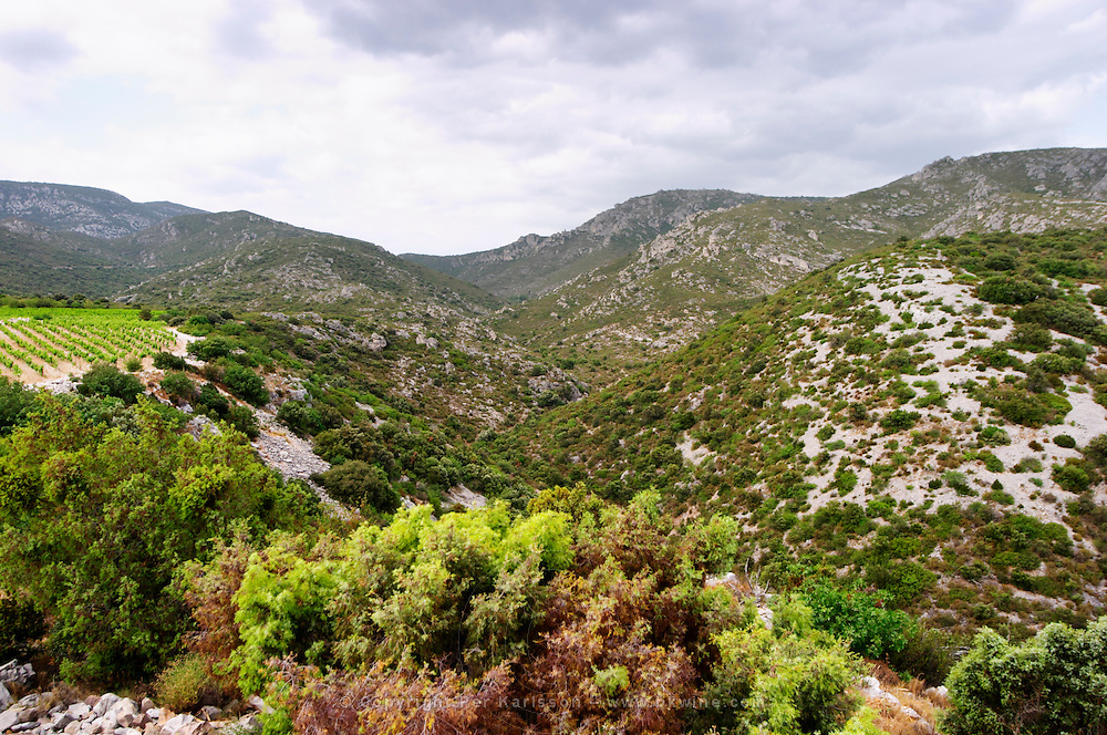 Domaine des Grecaux in St Jean de Fos. Montpeyroux. Languedoc. Garrigue undergrowth vegetation with bushes and herbs. France. Europe.
