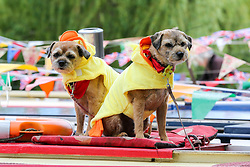 © Licensed to London News Pictures. 04/05/2019. London, UK. Two dogs sitting on a boat at the annual Canalway Cavalcade festival in Little Venice canals in West London. <br /> Inland Waterways Association's (IWA) annual gathering of over 100 decorated canal boats with bunting and flags at the annual Canalway Cavalcade festival in Little Venice canals in West London. The festival runs over the May bank holiday weekend which has been taking place since 1983. Photo credit: Dinendra Haria/LNP