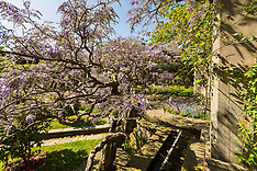 2018-05-04 - SWNS - WISTERIA - StokePoges2
