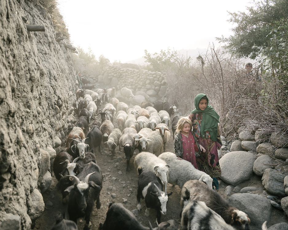 Return of the herds in the evening. Animal husbandry is a big part of life in the Wakhan – there are high pasture and the herds return in the evening. Sheep is for eating of course, but it's also used in barter, to acquire goods like extra flour etc.<br />